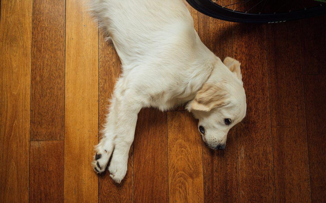 In 5 stappen je hond alleen laten