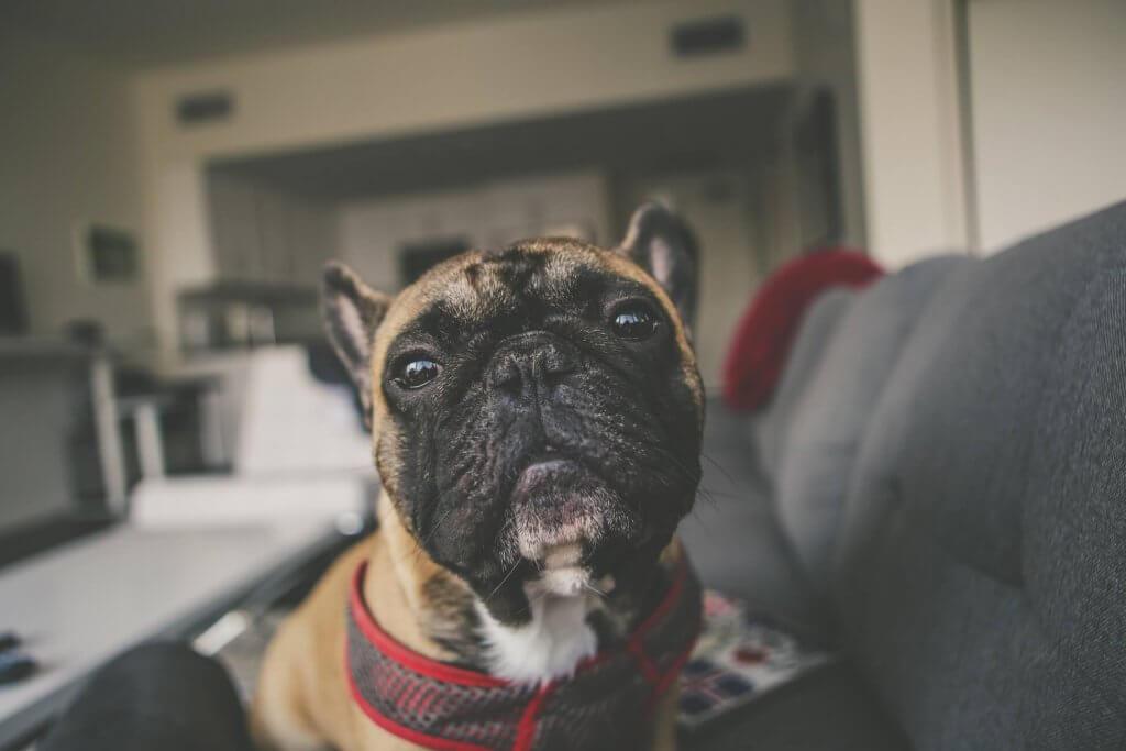 Wat is de beste plek voor je hondencamera