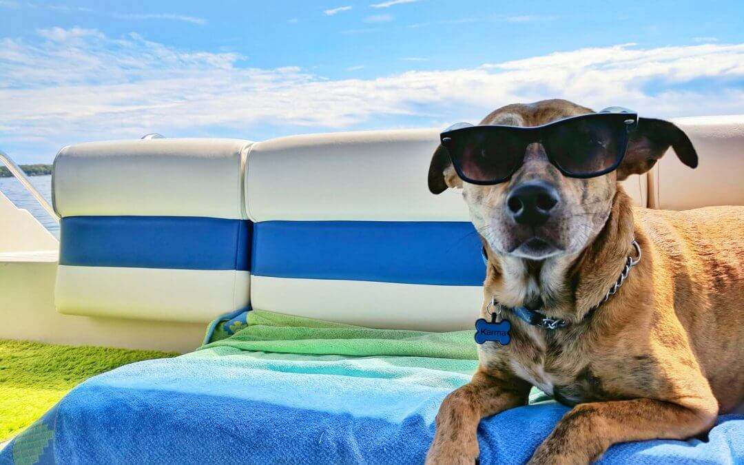Hondencamera gebruiken op vakantie