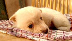 hond met gedragdsproblemen