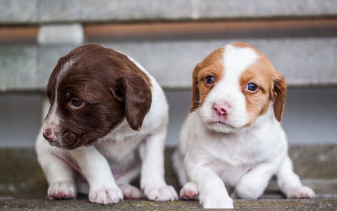 Hoe houd je een honden nest in de gaten?