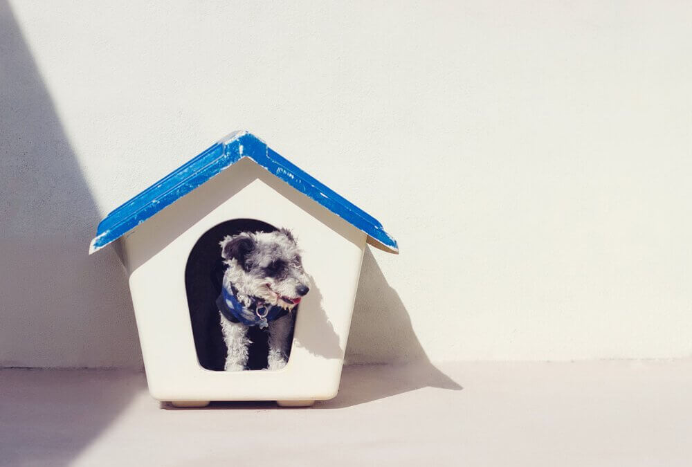 Hond in de sloopfase? HondenCamera kan helpen!