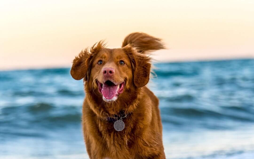 Warm weer: Hoe blijft je hond koel