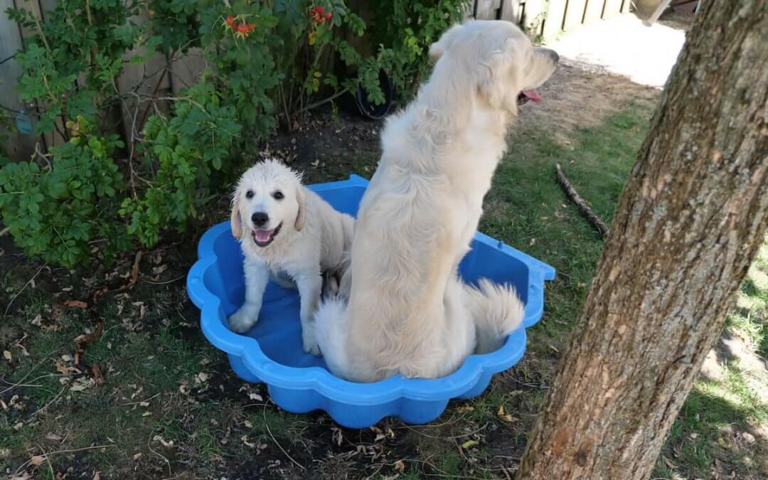 Top 4 zwembaden voor honden