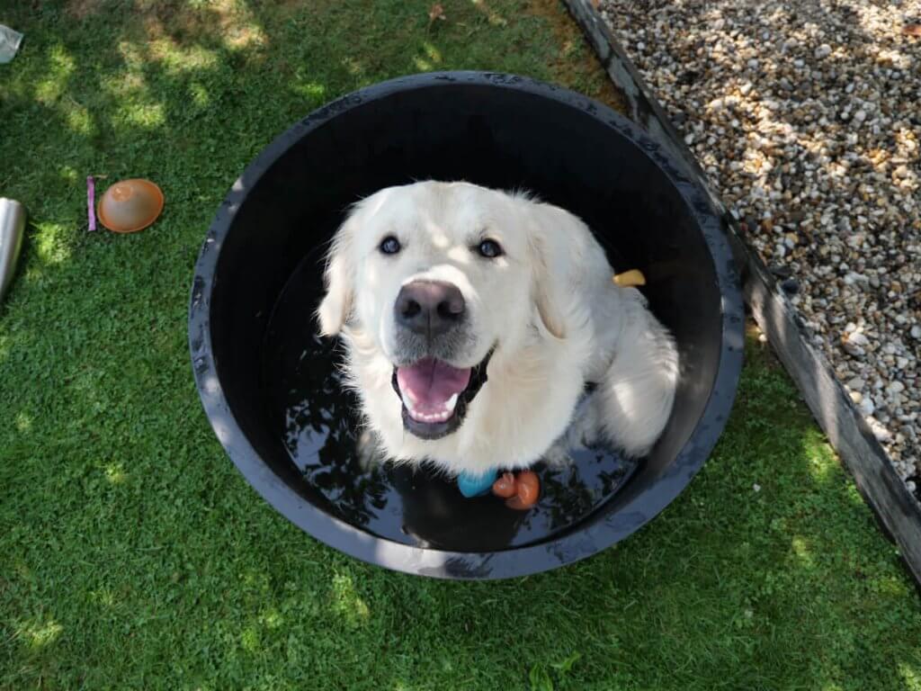beste hondenzwembad goedkoop