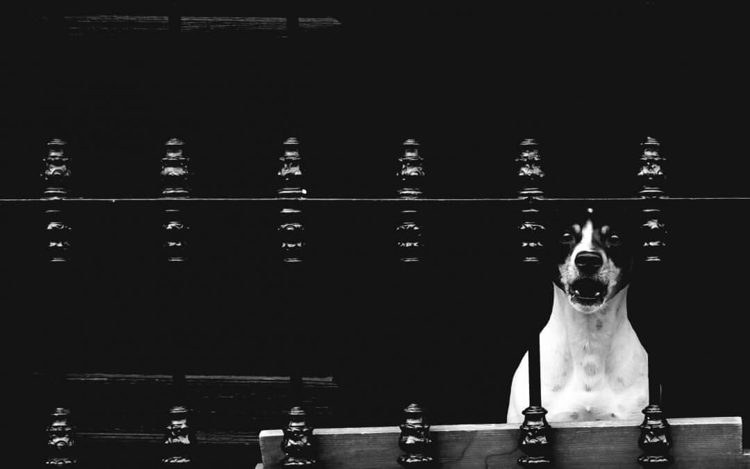Hond blaft midden in de nacht